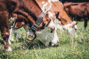 How to Start Successful Livestock Farming in Kenya